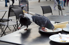 Pigeons Stealing Food Royalty Free Stock Photos