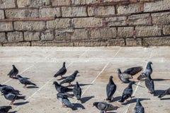Pigeons on stone pavement Royalty Free Stock Photos