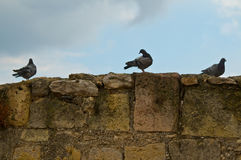 Pigeons on the stones Royalty Free Stock Photos