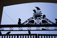 Pigeons sur la barrière Photos stock