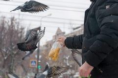 Pigeons sur la neige blanche dans la ville Image stock