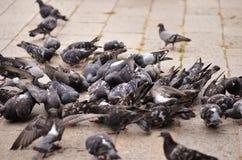 Pigeons sur la place à Venise Image stock