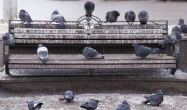 Pigeons sur le banc images libres de droits