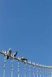Pigeons sur le câble de la passerelle photos libres de droits