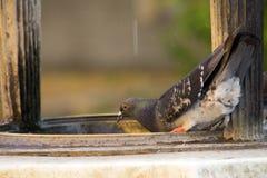 Pigeons sur le puits Image libre de droits