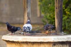 Pigeons sur le puits Photo libre de droits