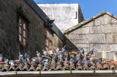 Pigeons sur le toit carrelé photographie stock