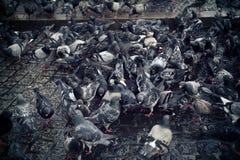 Pigeons sur le trottoir Photographie stock libre de droits