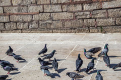Pigeons sur le trottoir en pierre Photos libres de droits