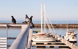 Pigeons sur les rails au-dessus de la marina Photo stock