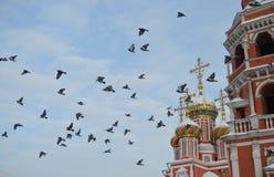Pigeons sur un fond d'église photographie stock libre de droits