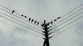 Pigeons sur un poteau Photographie stock libre de droits