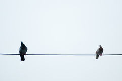Pigeons on Telephone Cable. View of pigeons resting on a telephone cable above a street Royalty Free Stock Photography