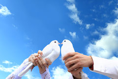 Pigeons to the wedding. Affection Pigeons to the wedding Stock Photos
