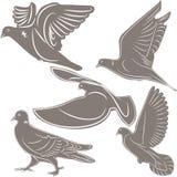 Pigeons, un symbole d'oiseau, Photographie stock