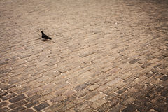 Pigeons, urban birds Royalty Free Stock Images