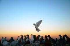 Pigeons in Urfa. Pigeons at sunset, Urfa, Turkey Royalty Free Stock Photos