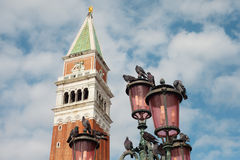 Pigeons, Venice, Italy. Stock Images