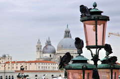 Pigeons in Venice Royalty Free Stock Photography