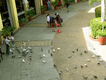 Pigeons, Venice Piazza, McKinley Hill, Taguig, Metro Manila, Philippines Royalty Free Stock Images