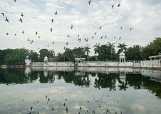 Pigeons volant au-dessus du lac Images libres de droits