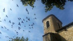 Pigeons volant aux dessus de toit Image libre de droits