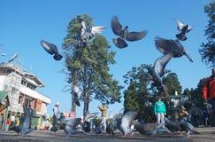 Pigeons volant haut dans le mail de Darjeeling Images stock