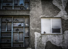 Pigeons on the Wall. A flock of pigeons on an old building wall Stock Images