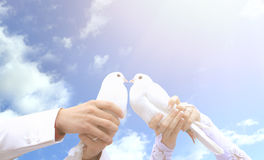 Pigeons on the wedding in the hands of young people. On the background of the sunny sky Royalty Free Stock Photography