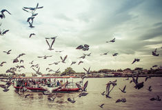 Pigeons were flying at Nonthaburi Pier.Thailand Royalty Free Stock Photography