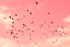 Pigeons were flying in the pink sweet sky. Stock Image