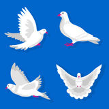Pigeons or white dove birds flying vector flat isolated icons. Pigeon or dove, white bird flying with spread wings in sky or sitting. Symbol of peace freedom or vector illustration