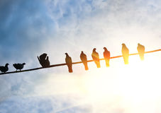 Pigeons on wire Royalty Free Stock Images