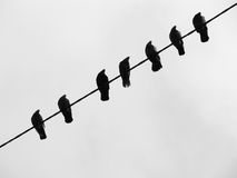 Pigeons on the wire Stock Photography