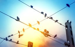 Pigeons on the wire, one pigeon flies to freedom, travel. The concept of freedom stock photography