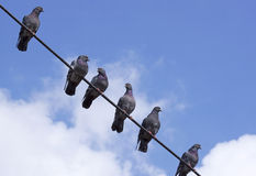 Pigeons on a wire - RAW format Royalty Free Stock Images