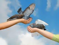 Piggeons Stock Image