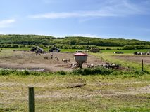 Piggery in the countryside Stock Images
