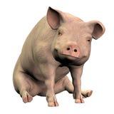Piggie 001 lizenzfreie abbildung