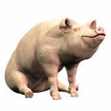 Piggie - 02 Stock Images