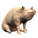 Piggie - 02 Imagens de Stock