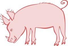 Piggie Fotografia Stock