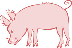 Piggie. Illustration a pink pig with bristly ears and tusks Stock Photo
