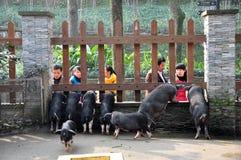 Piggy и посещая люди Стоковая Фотография RF