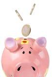 Piggy immagini stock libere da diritti