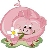 Piggy. Pig with white flower,isolated Royalty Free Stock Photo