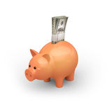 Piggy Stock Photography