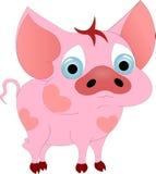 piggy Στοκ Εικόνες