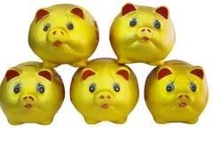 Piggy bank. Eyes shining golden piggy bank Stock Photography