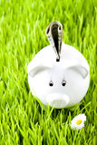 Piggy bank on Royalty Free Stock Images